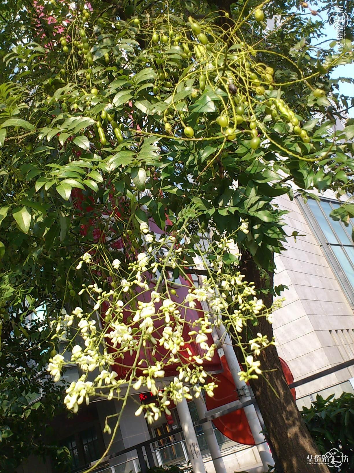 秋天结满累累果实,形同豆角的小树,和玩穿越的春天花朵有了交集,共同