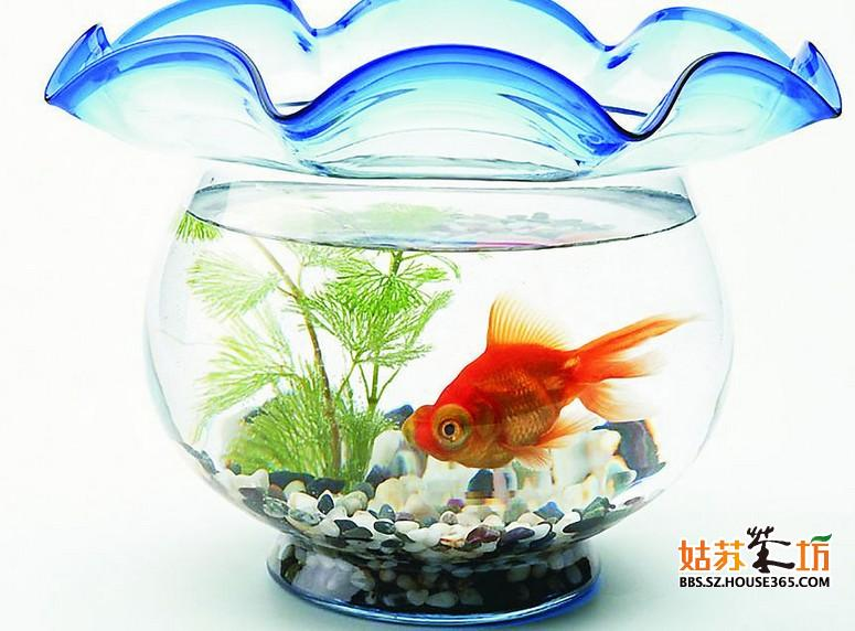鱼缸隔断效果图, 客厅鱼缸隔断效果图第一种:可放于入门处的一