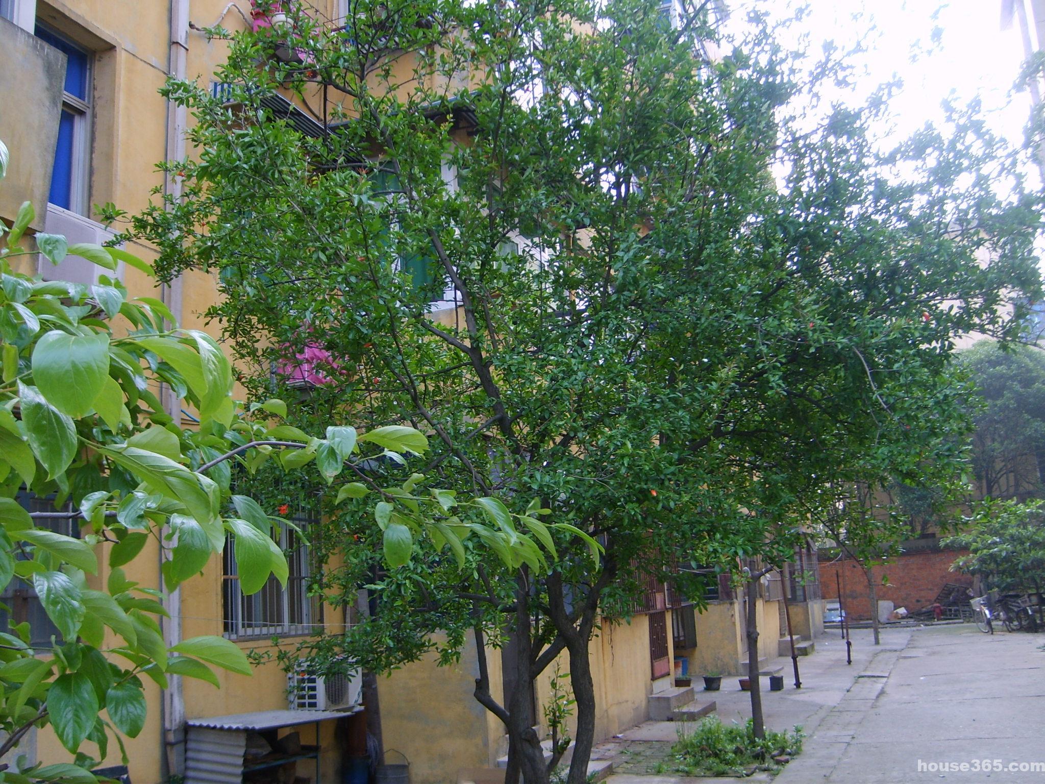 宿舍装饰画大树